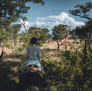 Reitsafari Südafrika