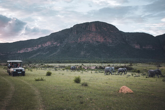 Safari Flitterwochen