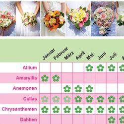 Blumenlexikon Hochzeitsblume