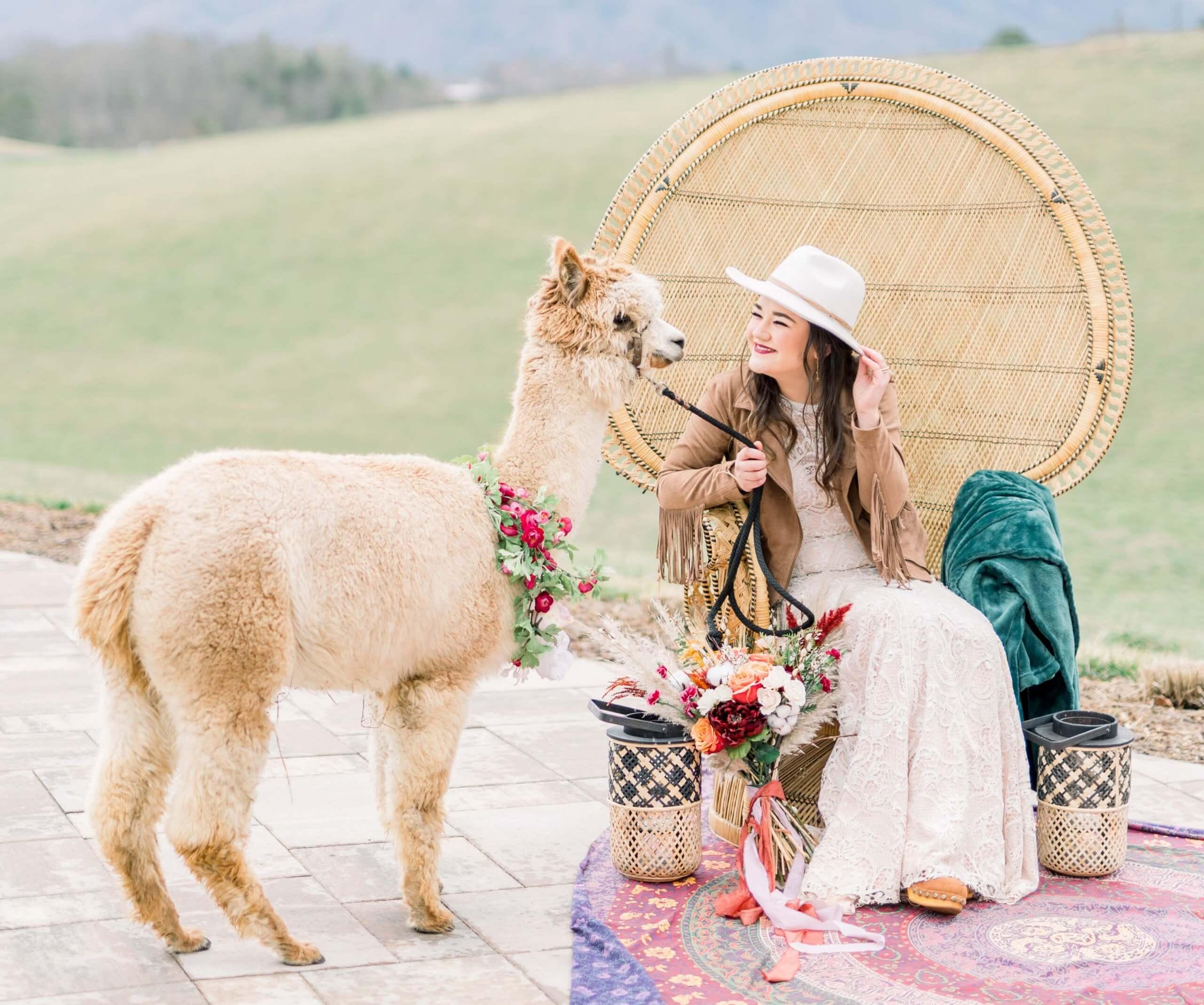 Hochzeit Alpaka