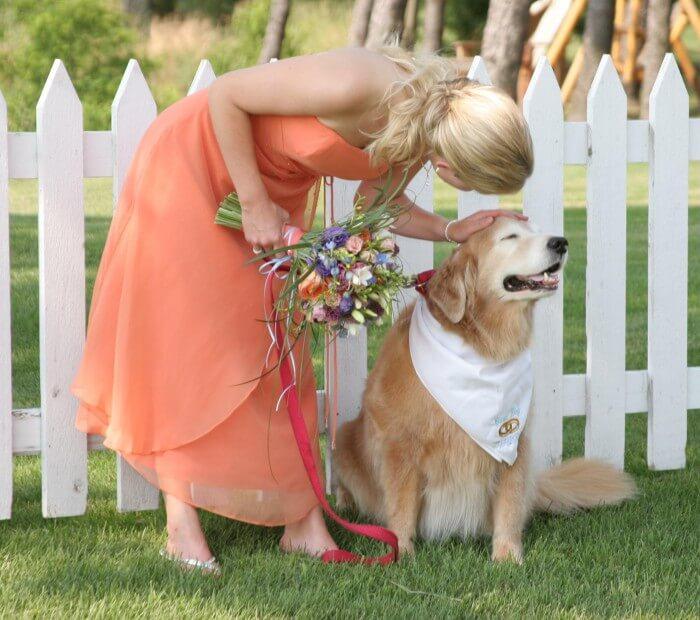 Hochzeit Hunde