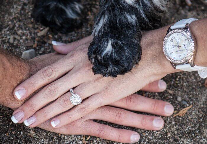 Tier Hochzeit